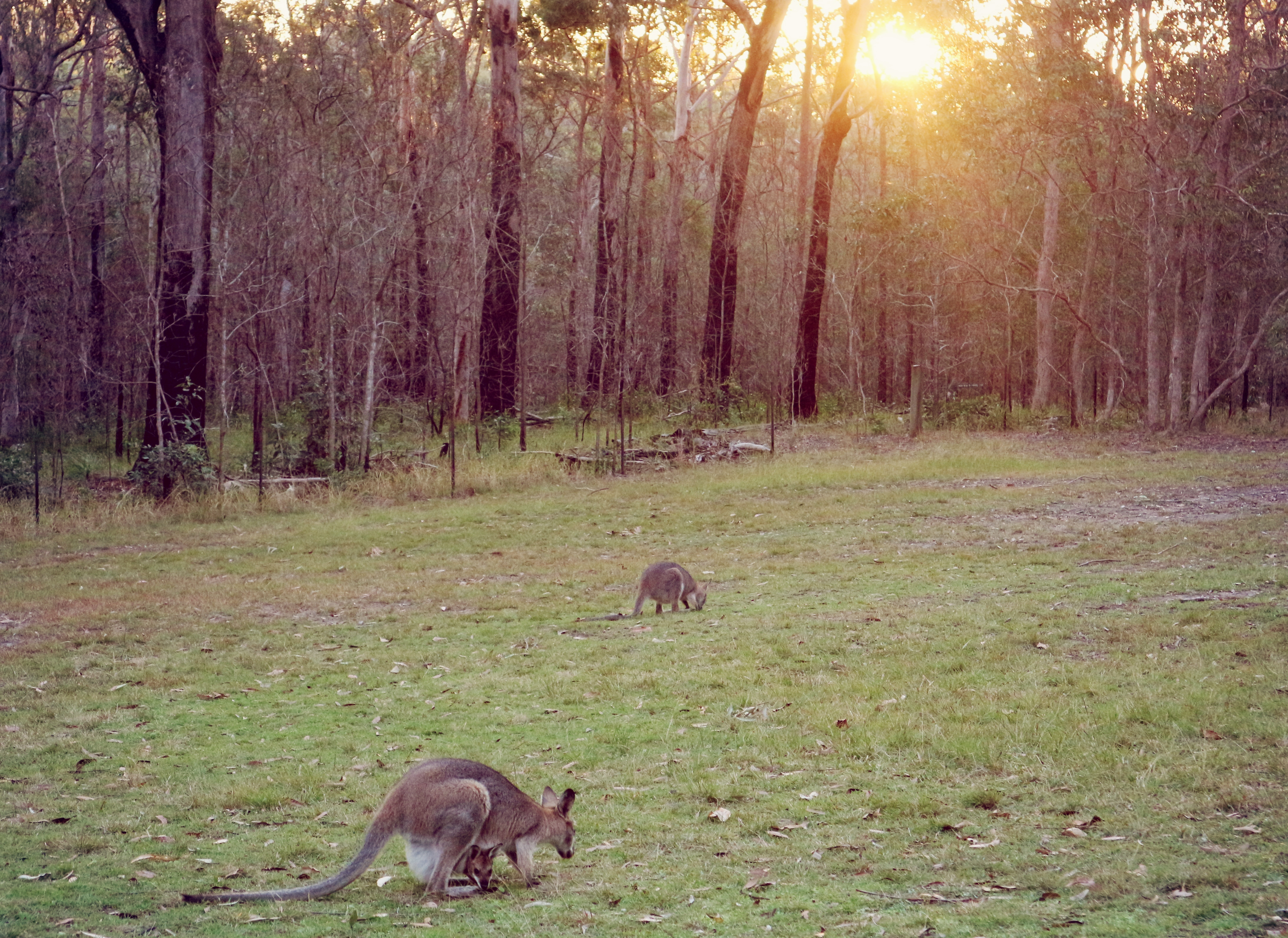 austrálie 6