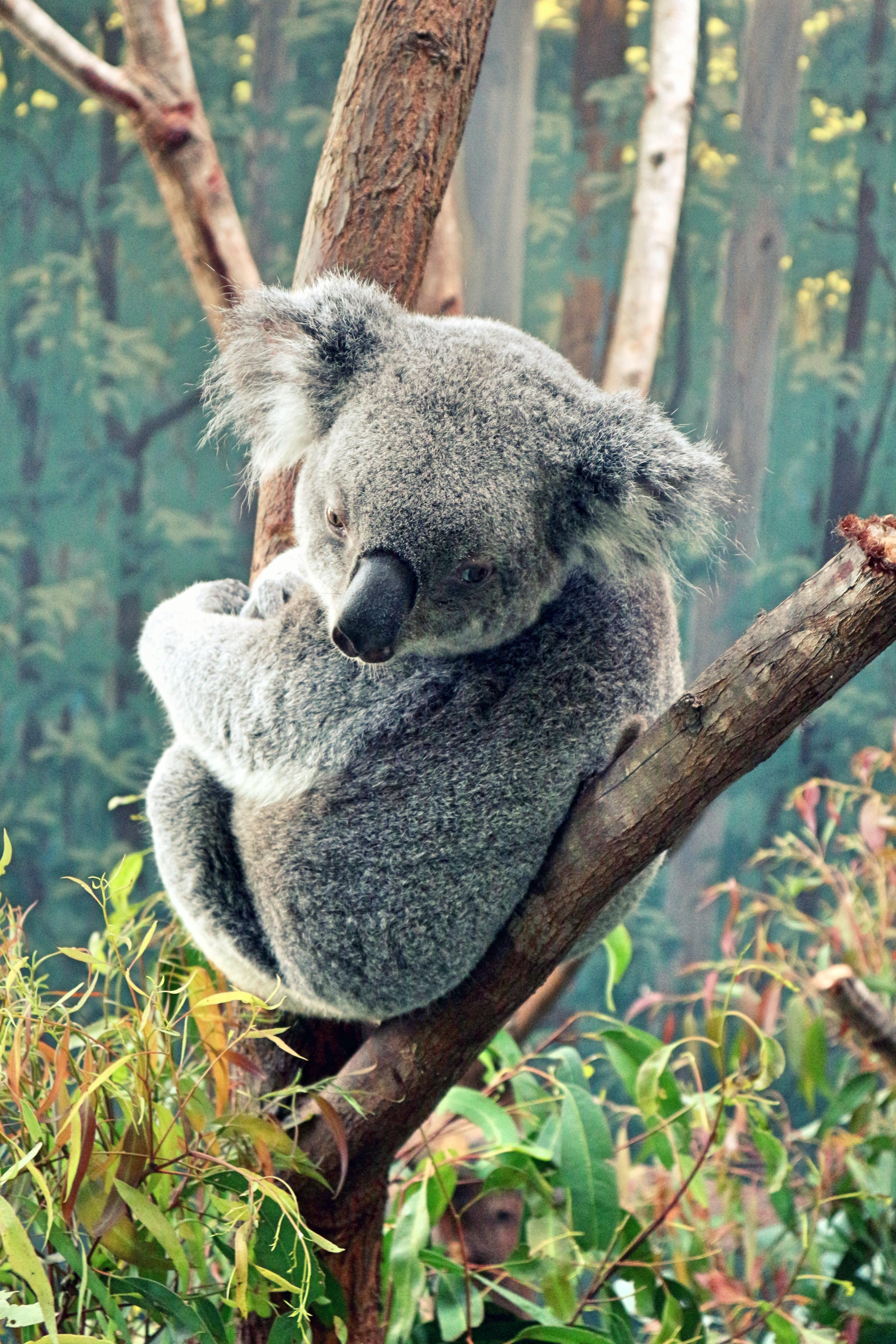 Milovníky zvířat z Austrálie