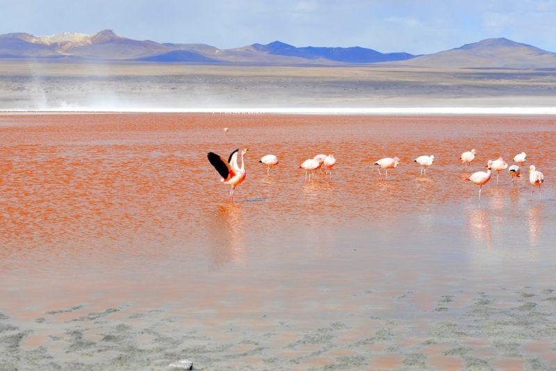 laguna colorada v Bolívii