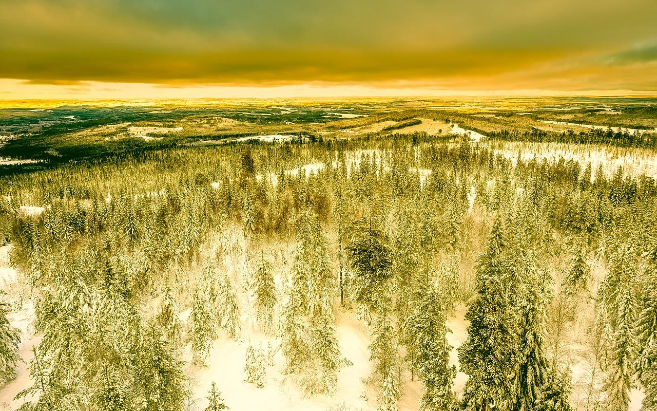 69 % Švédska tvoří lesy.
